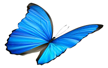 special-messages-butterfly-e1493906191815